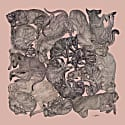 Sleeping Dogs Art Print Rose Quartz Small image