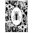 Elemental Beetle Print Black & White image