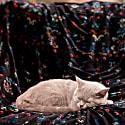 Marble Blanket image