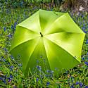 Mr Stanford Bangkok Citrus - British Handmade Umbrella image