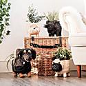 Coco Coir Animal Planter Dachshund image