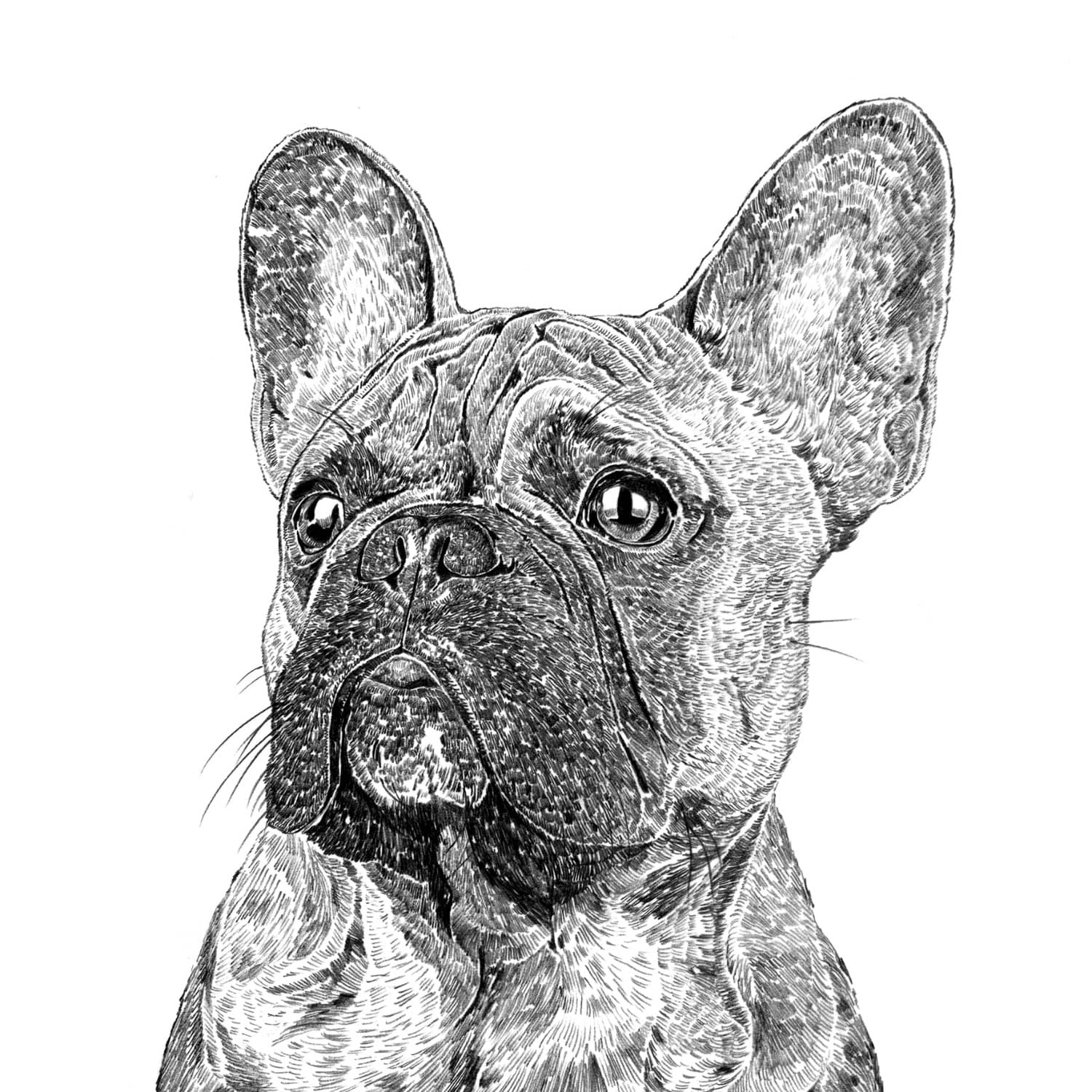 Frank The French Bulldog Print Ros Shiers Wolf Amp Badger