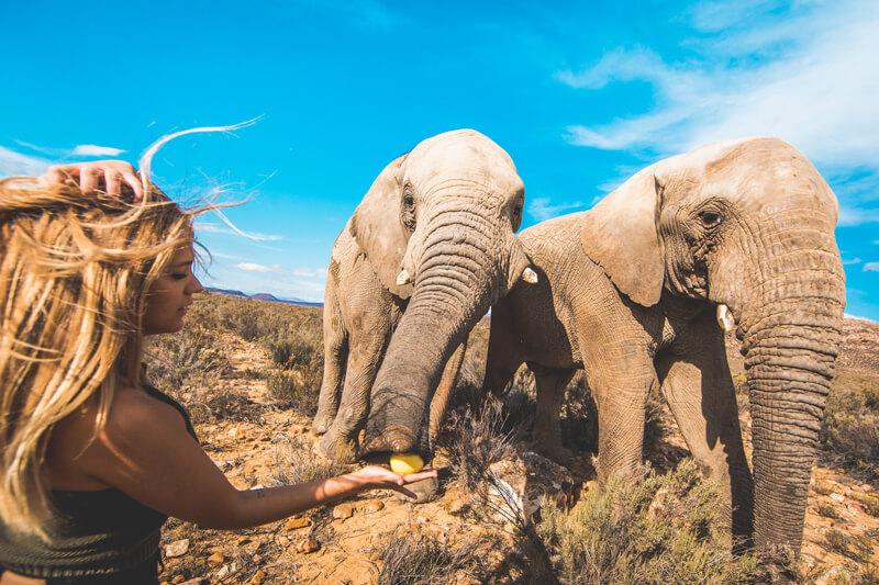ec cap town student elephant