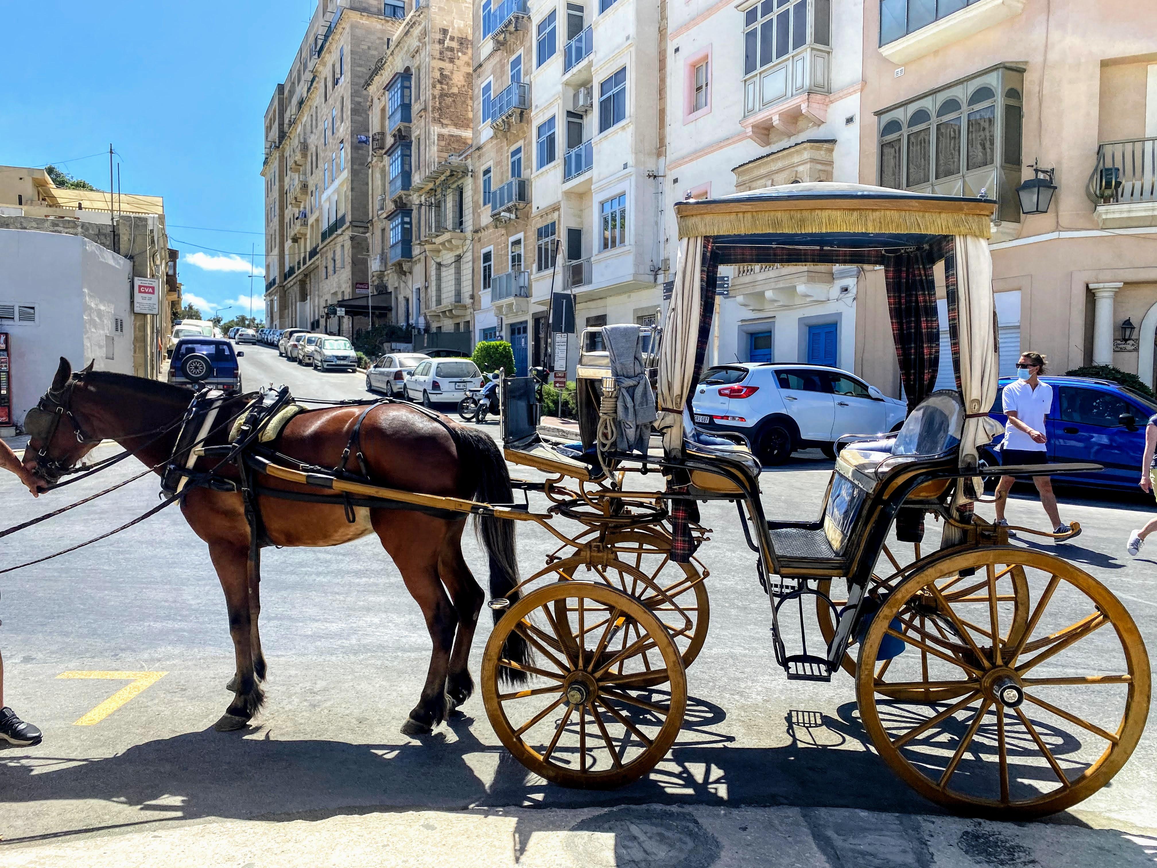 horse drawn carriage valetta malta