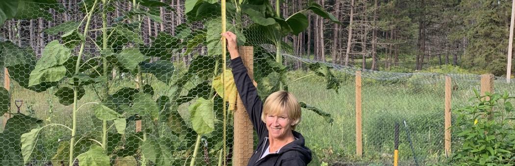 Veggie or Herb Garden