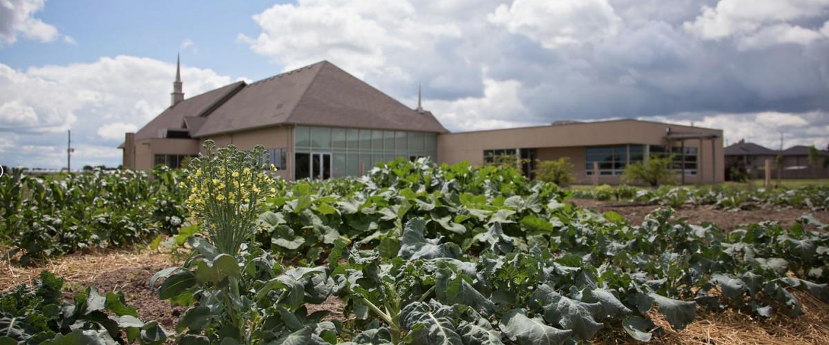 Fruitful Harvest Community Garden