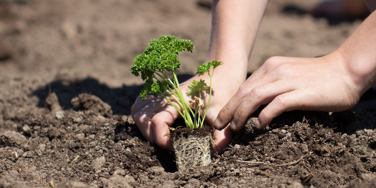 Building a Garden. Growing a Community.