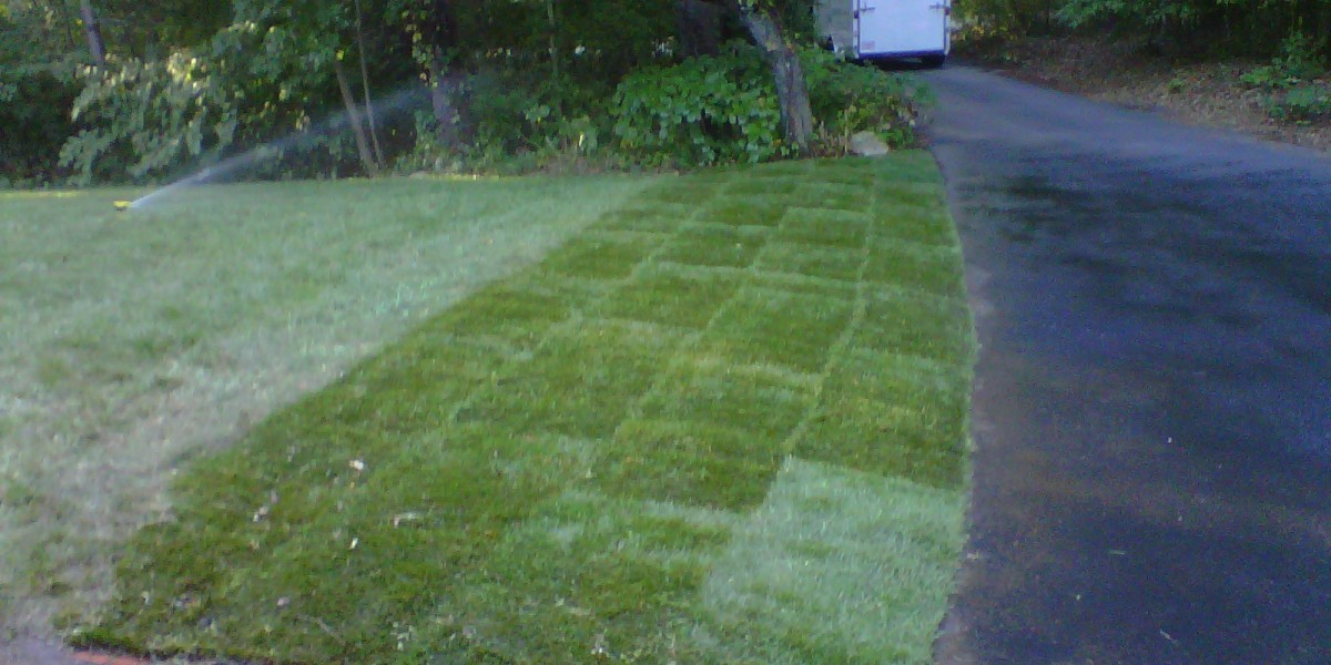 Lawns & Sod