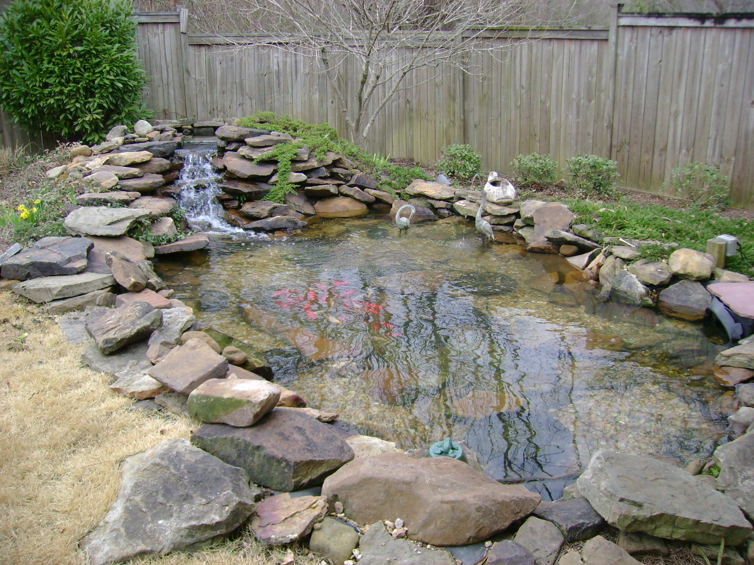 Water features total lawn care tupelo for Outdoor fish pond care