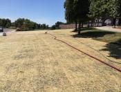 Temporary Irrigation