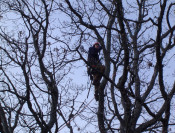 Mature Tree Pruning