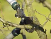 Lopper pruning cut