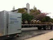 Fall Tree Installations