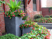 Tropical entry urns