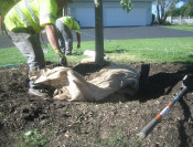 Proper Planting Depth