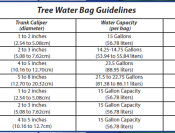 Tree Water Bag Guidelines