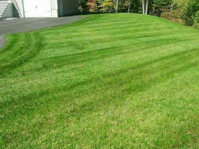 Lawn cut (Billerica, MA)