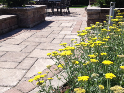 Colour brings joy to your outdoor space