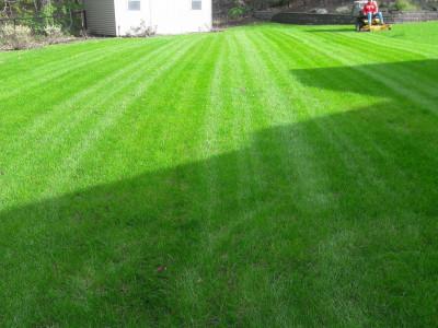 Lawn cut (Woburn, MA)