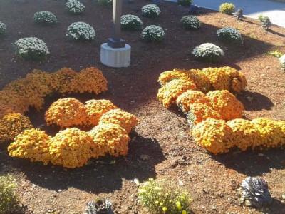 Planting in Billerica, MA