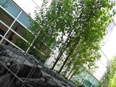 Durham College Whitby Campus Courtyard