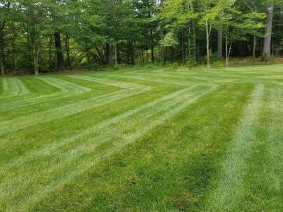 Specialty cut (Boxford, MA)