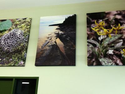 Bruce trail conservancy canvas gallery wraps.