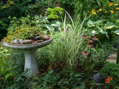 Birdbath planted with sedums, next to Dixieland Maidengrass.
