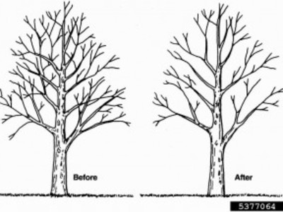 Tree Trimming/Pruning