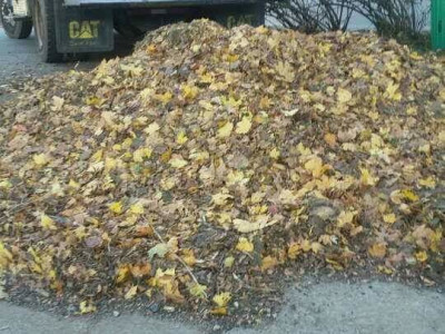 Fall cleanup (Stoneham, MA)