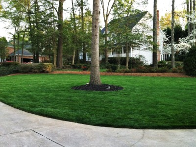 Lawns & Sod
