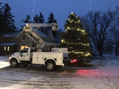 Why not light up that tree? This tree takes 30 watts of energy with new LED lights.