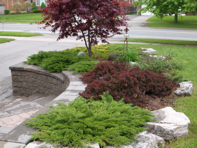Colour harmony with Bloodgood Japanese Maple and Concorde Barberry.