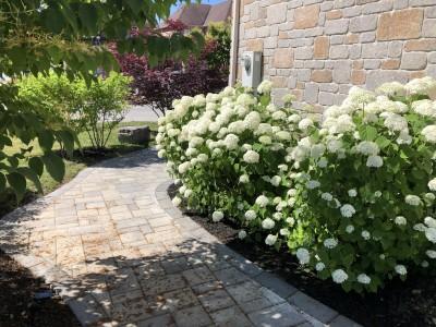 Abundant colour is provide by proper landscape design