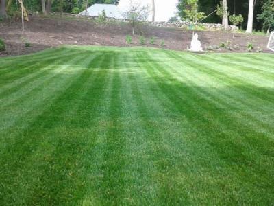Lawn cut (Lexington, MA)