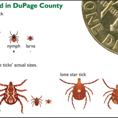 Blacklegged (Deer) Tick, Brown Dog (Wood) Tick, Lone Star Tick