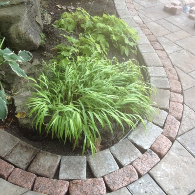Soft plantings add ambiance to any space