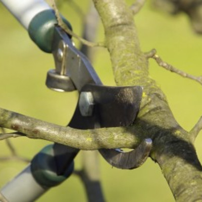 Lopper pruning cut