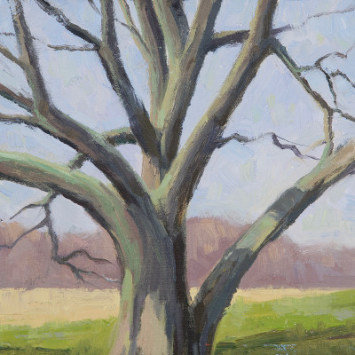 Silver Maple 8X8  | oil on panel  |  $350.00
