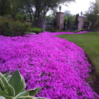 Entry Planting Design