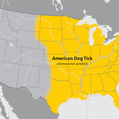 American Dog Tick Populations
