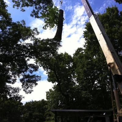 Oak Removal over Residence