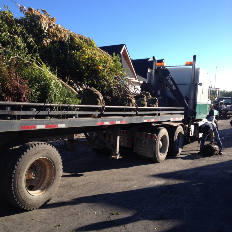 Have a large tree job? We're ready!