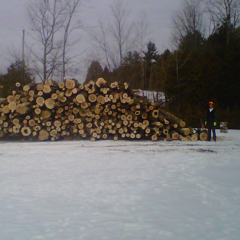 Load of Hardwood Logs