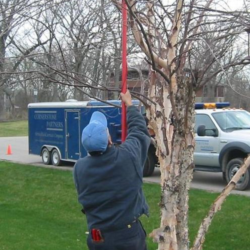 Shade Tree Pruning