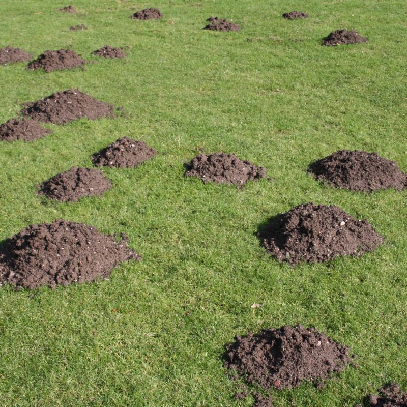 Active Mole Hills