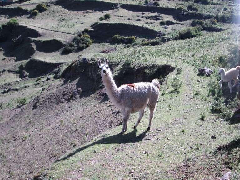 El turismo vivencial en los Andes peruanos