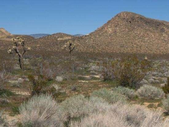 Estados Unidos: Mojave, el desierto olvidado de California