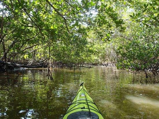 Travesía en kayak por los Everglades de Florida.