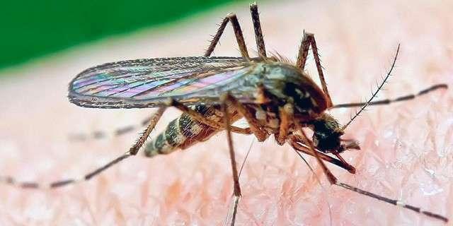 Consejos para evitar las picaduras de mosquitos en Tailandia
